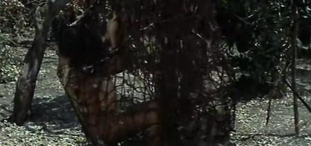 Gungala la vergine della giungla 15