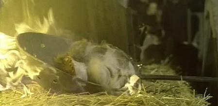 Le vergini cavalcano la morte 15