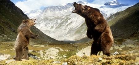 8 L'orso foto