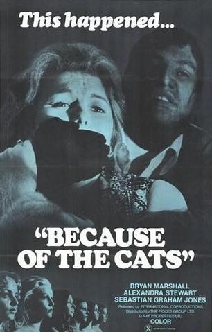 Perchè i gatti 1