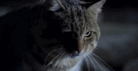 Il gatto 6