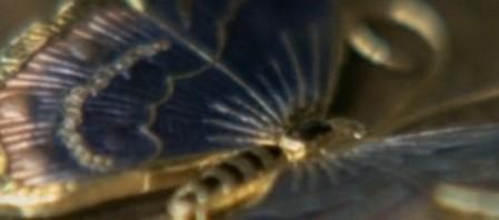 Una farfalla con le ali insanguinate 3