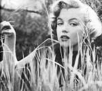 5 Marilyn Monroe pb25